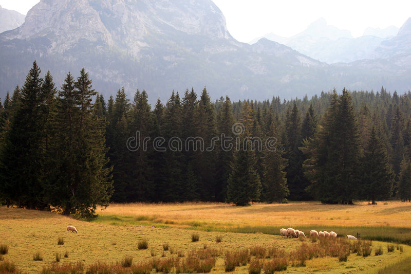 Sommer in Montenegro lizenzfreie stockfotografie