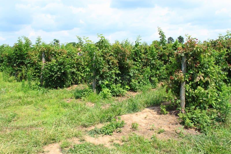 Sommer-Obstgarten lizenzfreie stockbilder