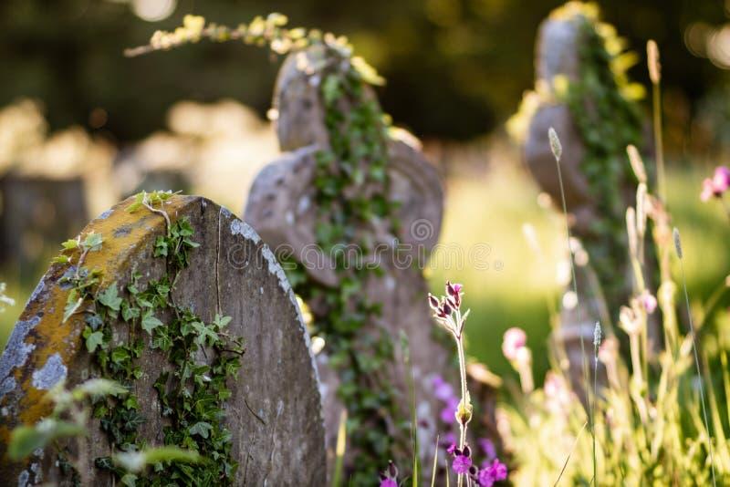 Sommer pflanzt das Wachsen auf einem alten Grabstein lizenzfreies stockfoto