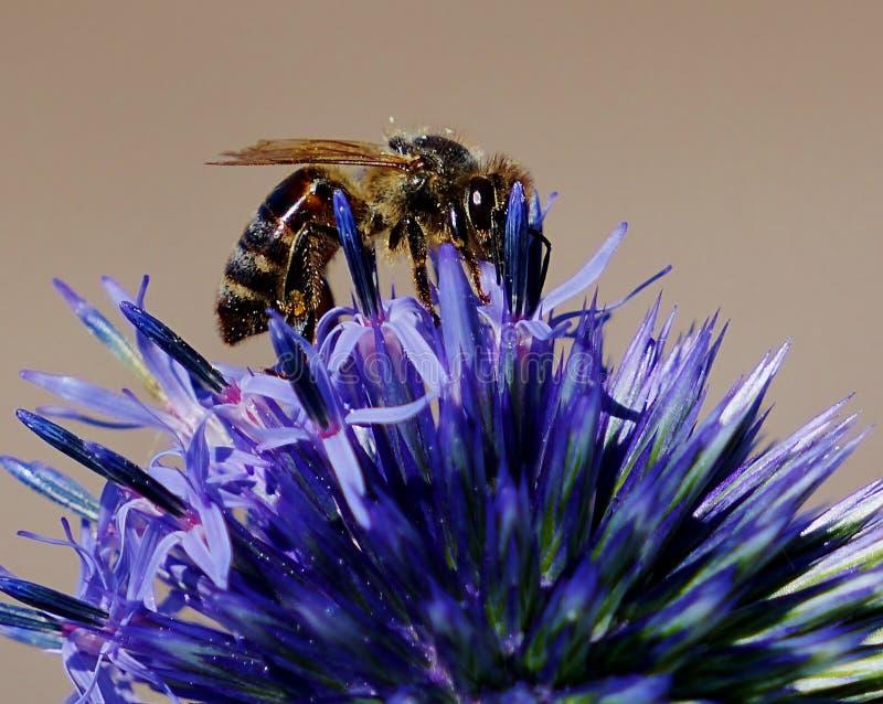 Sommer pollenation lizenzfreies stockfoto