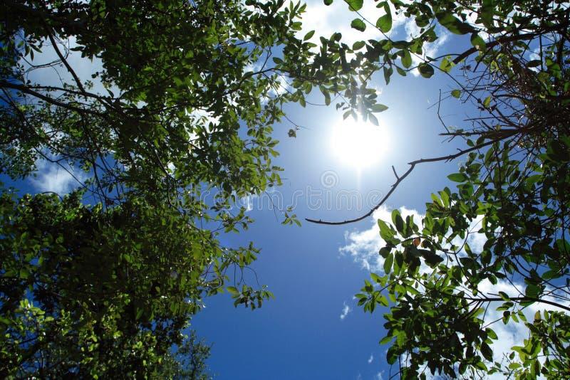Sommer Soltice lizenzfreie stockfotografie
