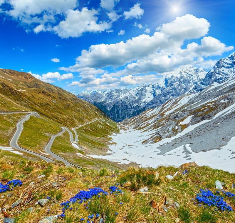 Sommer Stelvio Pass Italy und blaue Blumen in der Front stockfoto