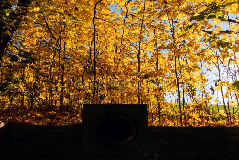 Sommer Sunny Forest Trees And Green Grass Natur-hölzerner Sonnenlicht-Hintergrund Sofortiges getontes Bild stockfotografie
