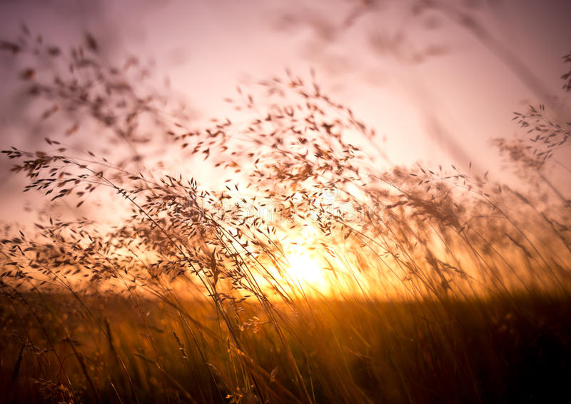 Sommer-trockenes Gras stockfotos
