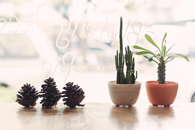 Sommer und Kaktus lizenzfreies stockbild