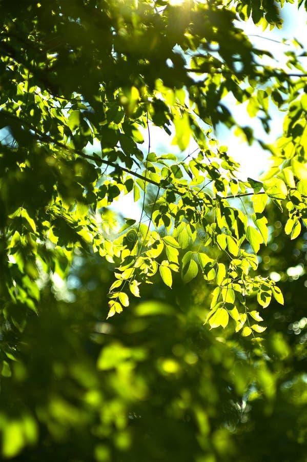 Sommer-Wald lizenzfreie stockfotografie