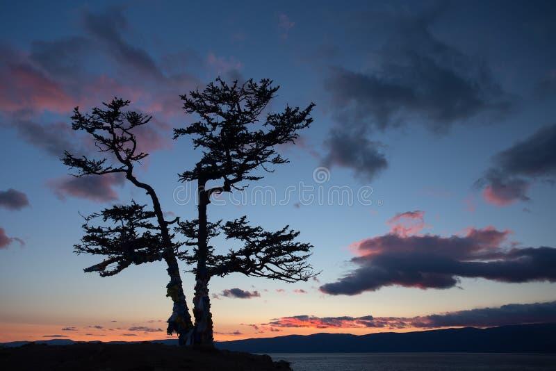 Sommerabendlandschaft mit einem Lärchenbaum auf der Küste vom Baikalsee stockfoto