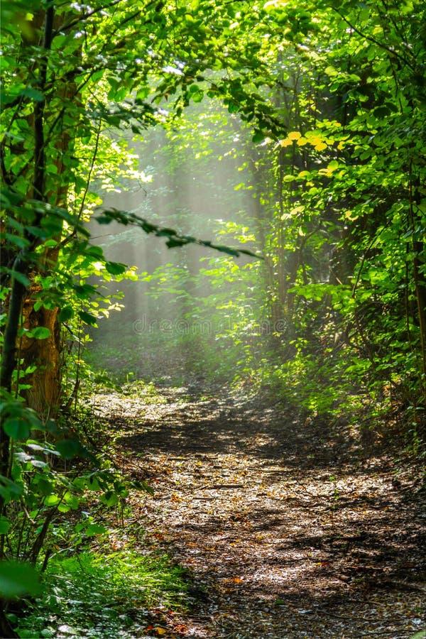SommerBäume des Waldes Grüne hölzerne Sonnenlichthintergründe der Natur lizenzfreie stockfotos