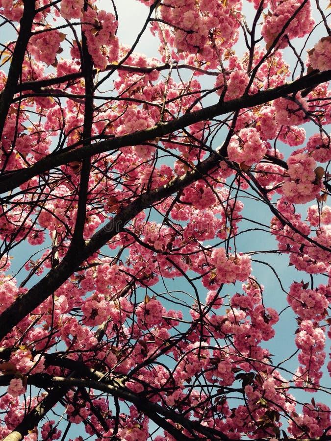 Sommerblüte lizenzfreies stockbild