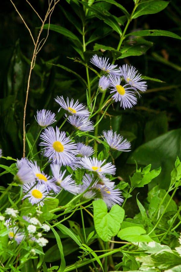 Sommerblüte im Garten lizenzfreie stockfotos