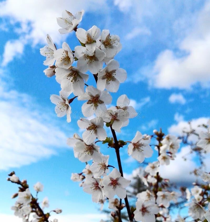 Sommerblume in voller Blüte lizenzfreies stockbild