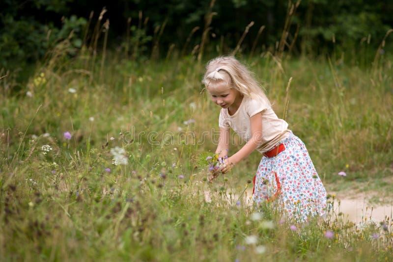 Sommerblumen stockfotografie