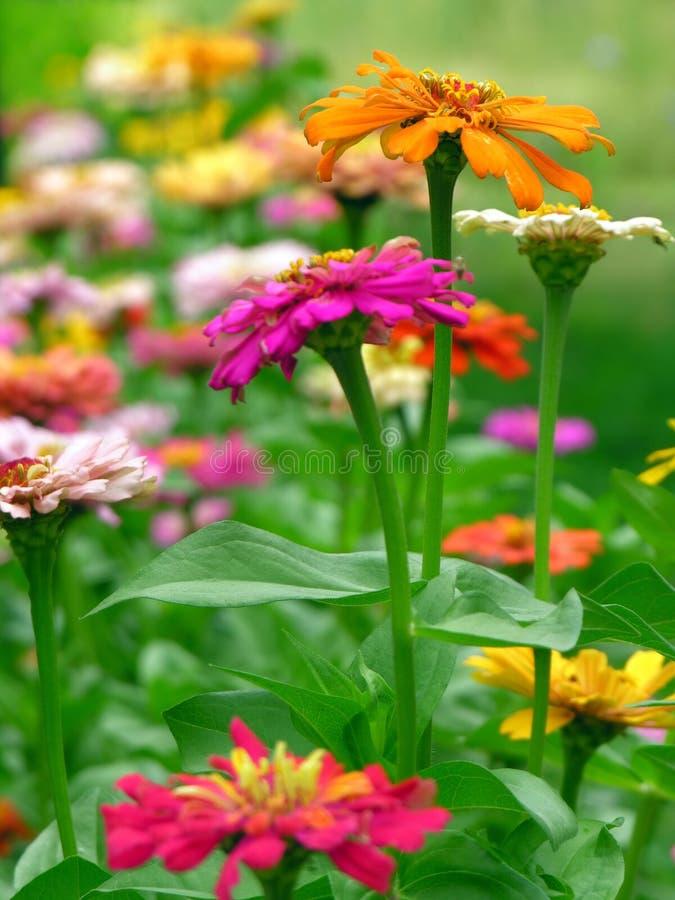 Sommerblumen lizenzfreie stockfotos