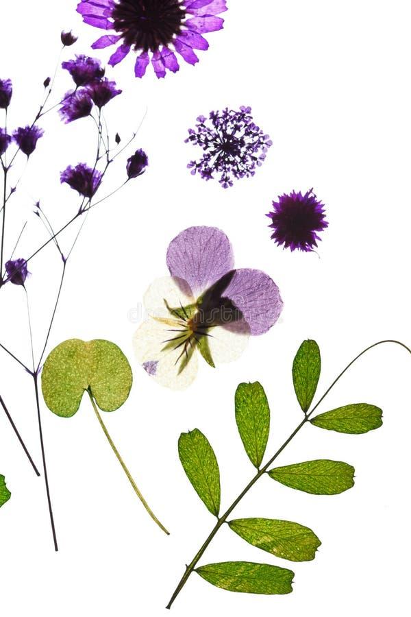 Sommerblumen stockfoto