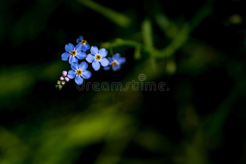 Sommerblumen auf einer mysteriösen Wiese stockfotografie