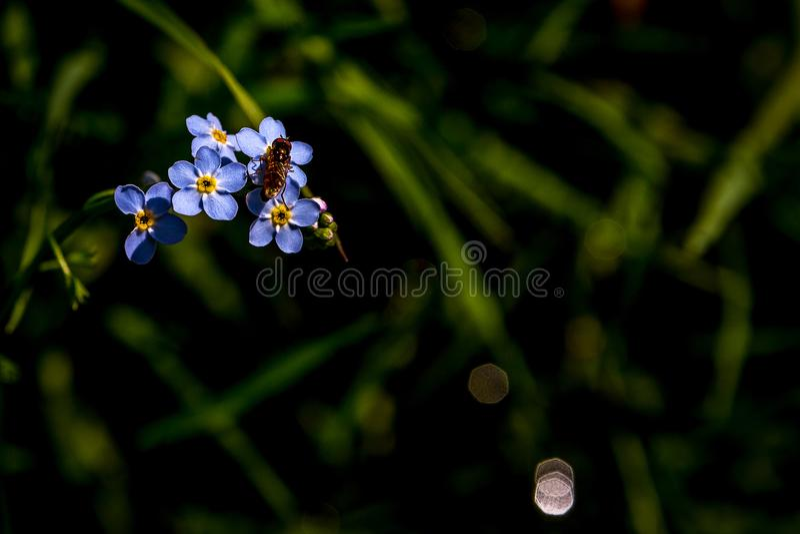 Sommerblumen auf einer mysteriösen Wiese lizenzfreie stockfotografie