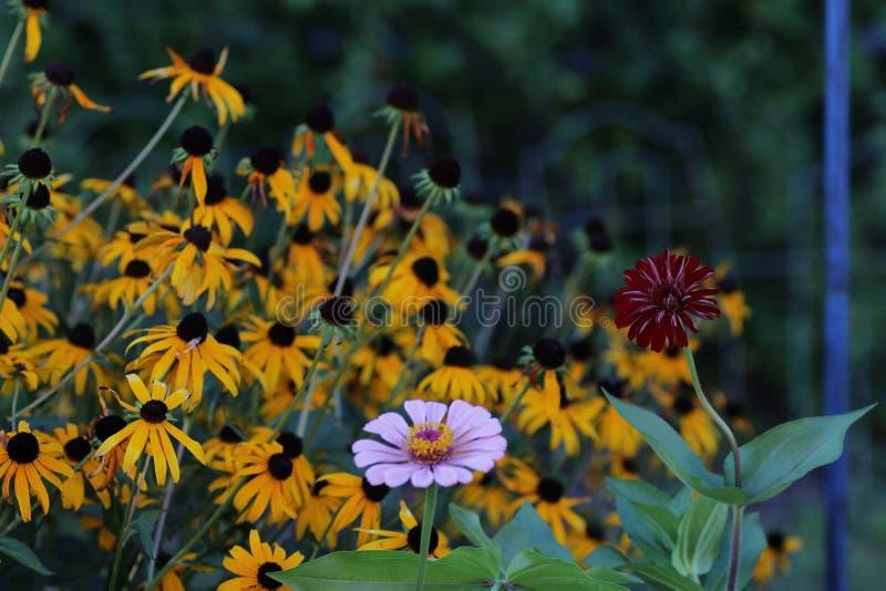 Sommerblumen in der vollen Blüte lizenzfreies stockfoto
