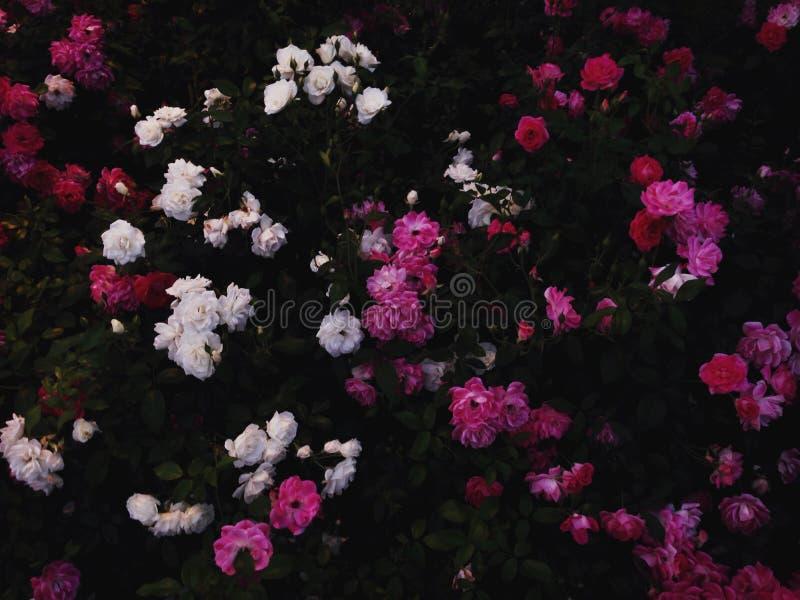 Sommerblumen im Garten stockbild