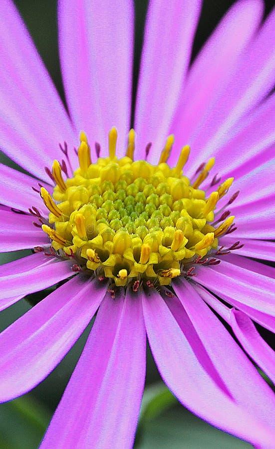 Sommerblumenblätter