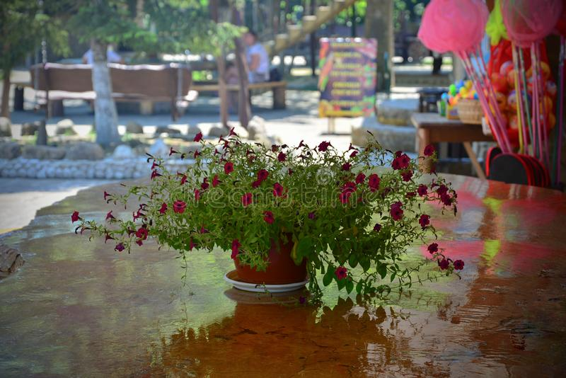 Sommercafésteintabellen-Blumentopfrest lizenzfreies stockbild