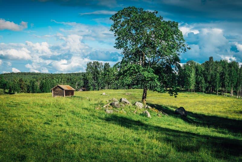 Sommerfeld in Schweden stockbild