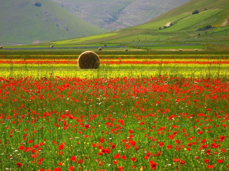 Sommerfelder stockfoto