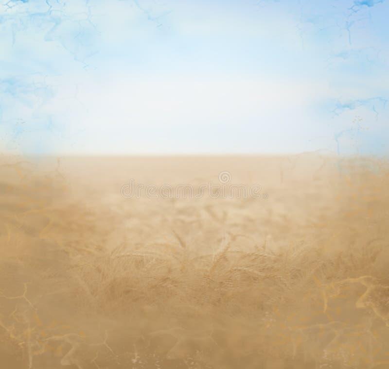 Sommerfeldhintergrund lizenzfreies stockfoto