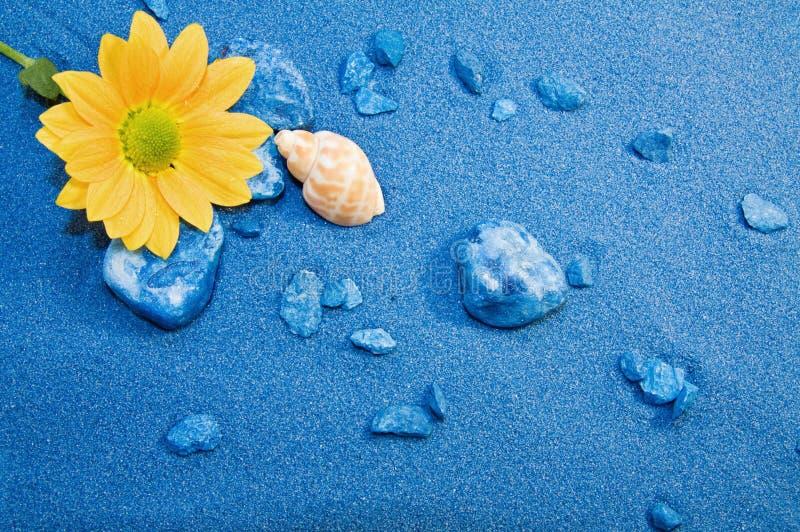 Sommerferien - blaue Sande setzen auf den Strand und blühen lizenzfreies stockbild