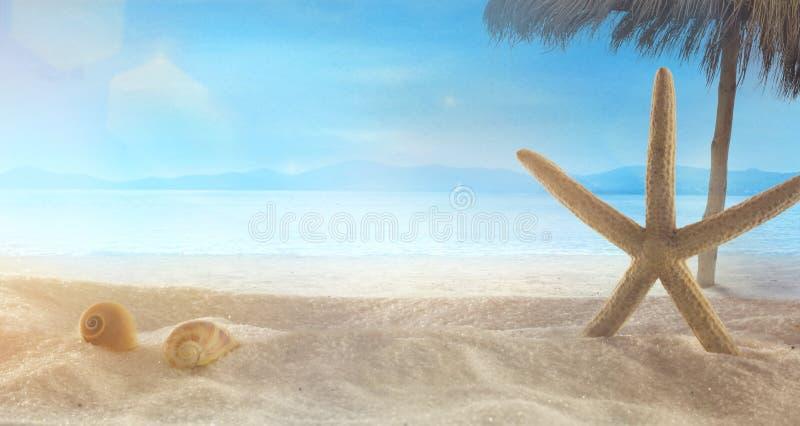 Sommerferien mit Sternfischen auf Sand stockbild