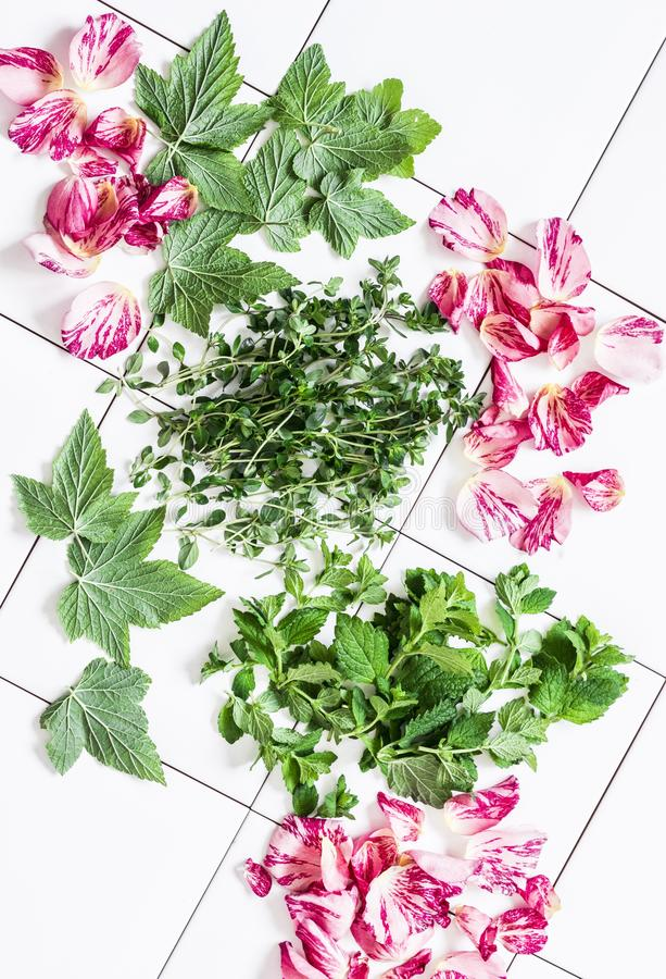 Sommergarten-Krautteebestandteile - Thymian, Korinthenblätter, Minze, rosafarbene Blumenblätter, Melisse auf einem hellen Hinterg lizenzfreie stockfotos