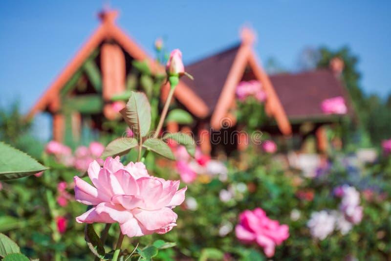 Download Sommergarten und -Holzhaus stockfoto. Bild von rustic - 90237088