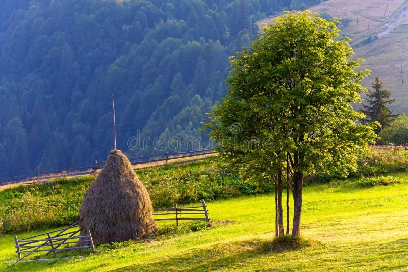 Sommergebirgswieselandschaft lizenzfreies stockbild