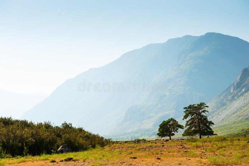 Sommerlandschaft in Altai-Bergen, Sibirien, Russland lizenzfreies stockbild