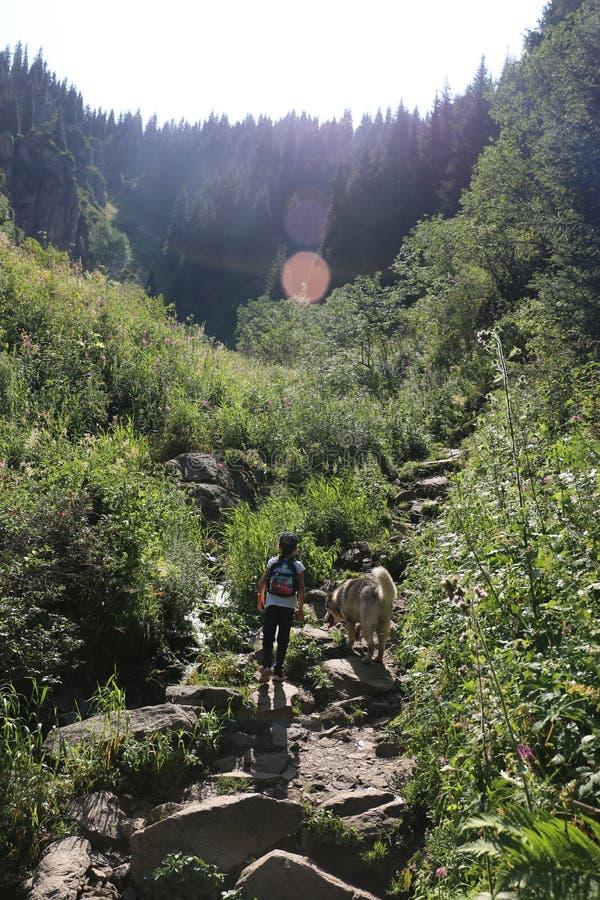 Sommerlandschaft in den Bergen stockbild