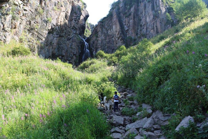 Sommerlandschaft in den Bergen stockfotografie