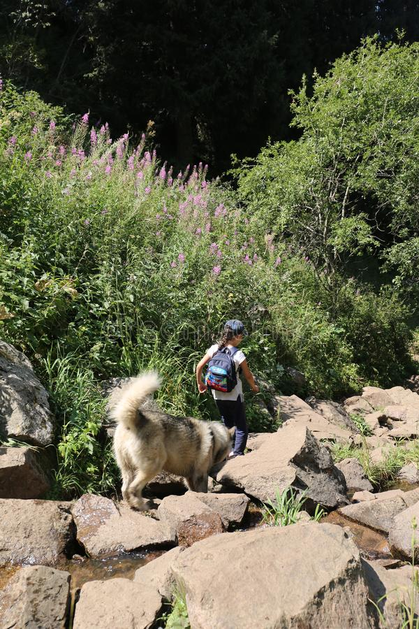 Sommerlandschaft in den Bergen lizenzfreie stockfotos