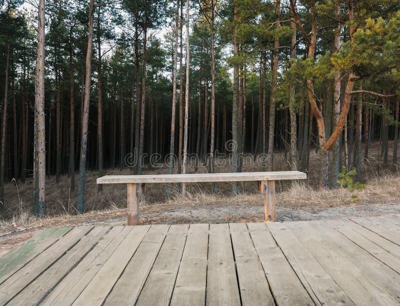 Sommerlandschaft mit Bank vor Wald lizenzfreies stockfoto