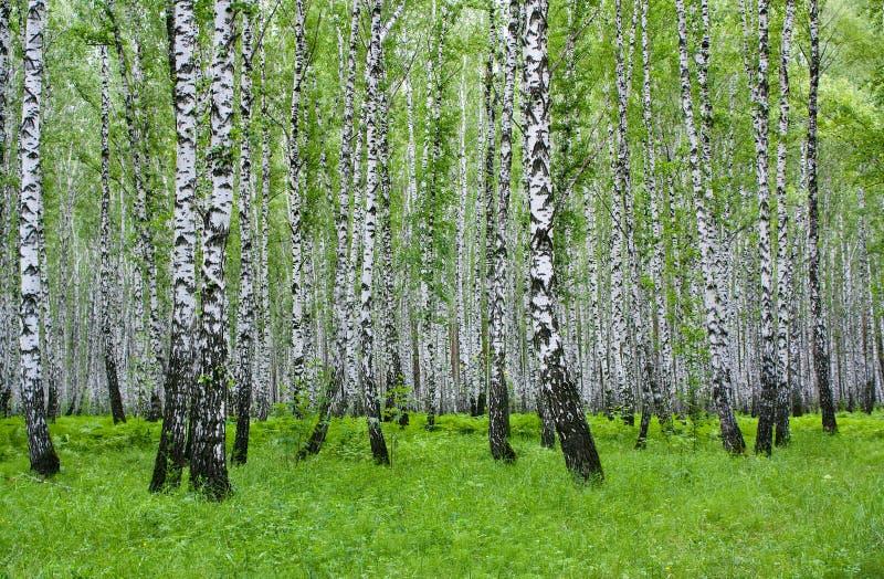 Sommerlandschaft mit dem Holz lizenzfreies stockfoto