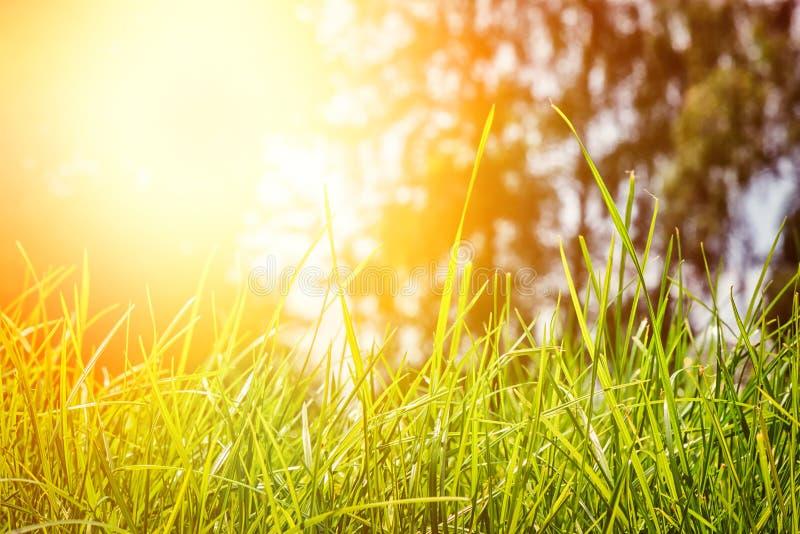 Sommerlandschaft mit grünem Gras Feld des grünen Grases gegen einen blauen Himmel mit wispy weißen Wolken lizenzfreies stockbild