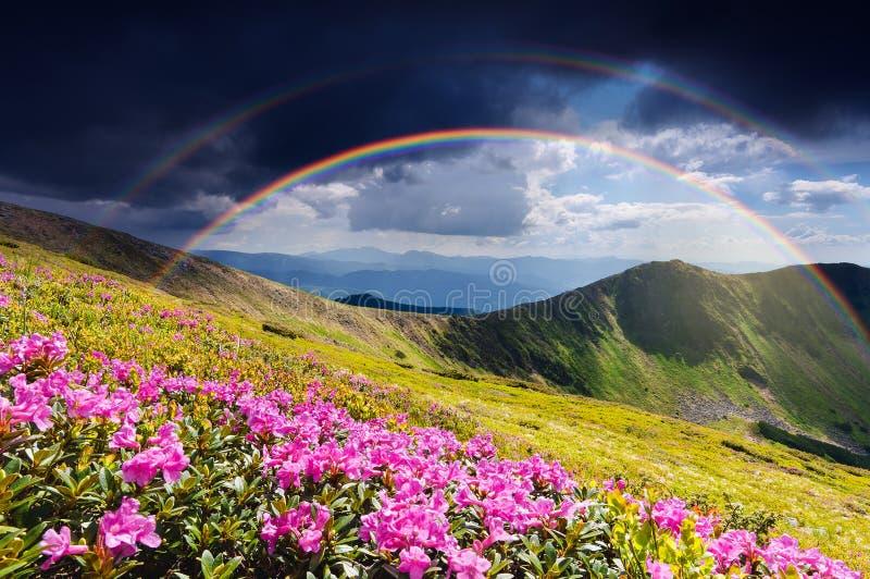 Sommerlandschaft mit Rhododendronblumen und einem Regenbogen in lizenzfreies stockfoto