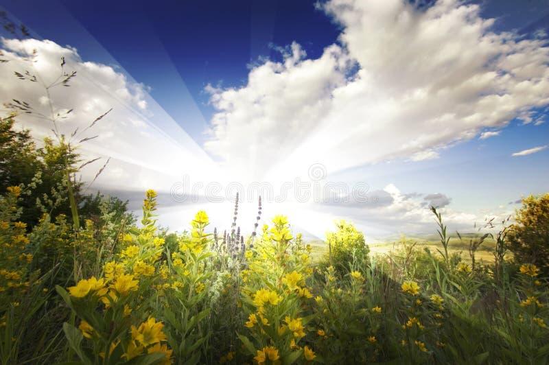 Sommerlandschaft mit Sonnenstrahlen, Wolken, blauem Himmel und gelben Blumen lizenzfreie stockbilder