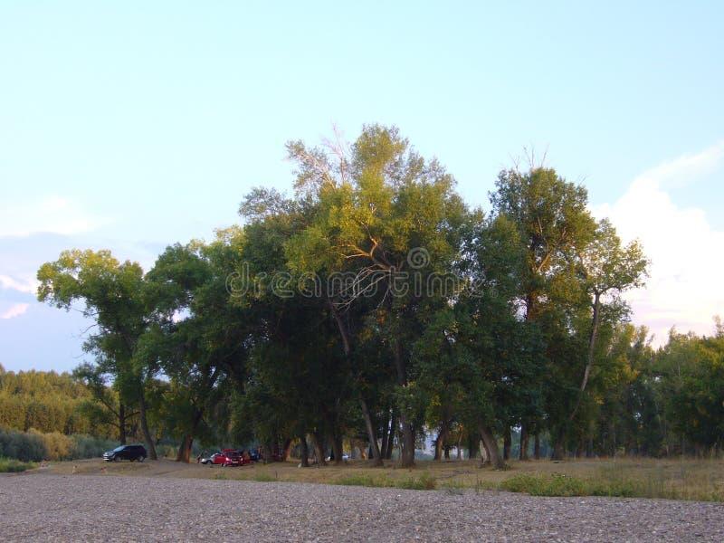 Sommerlandschaft mit steinigem Ufer und Bäumen lizenzfreies stockfoto