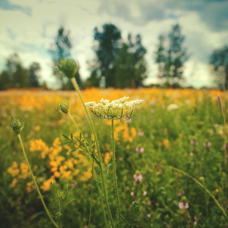 Sommerlandschaft mit wilden Blumen lizenzfreie stockbilder