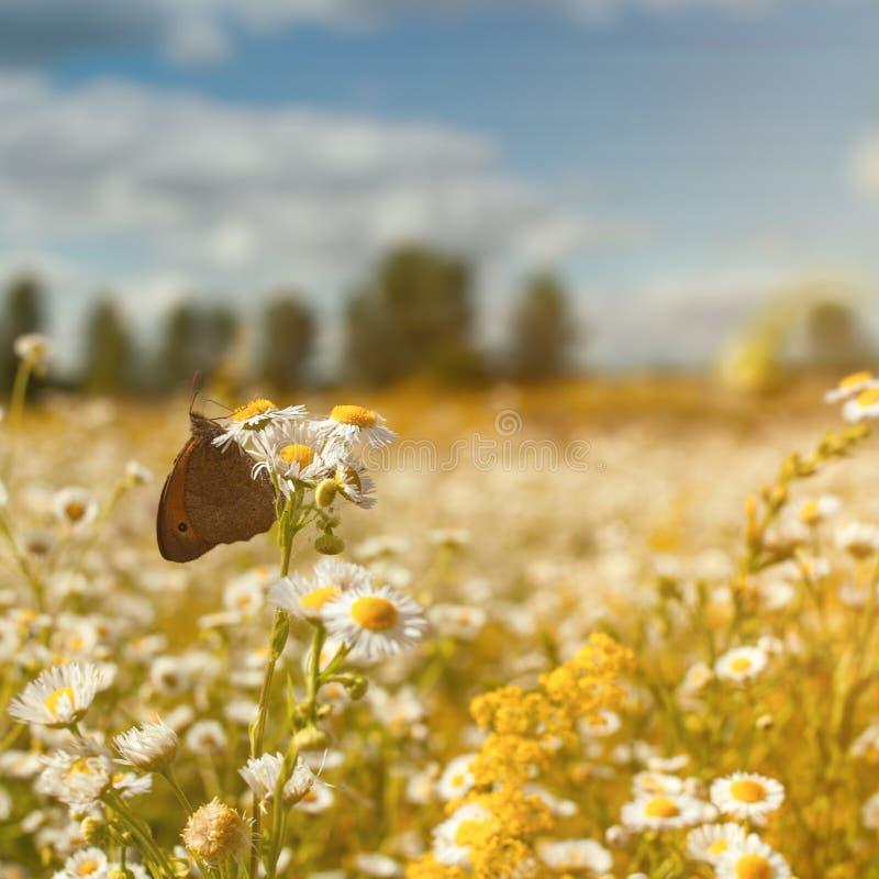 Sommerlandschaft mit wilden Blumen stockfotografie