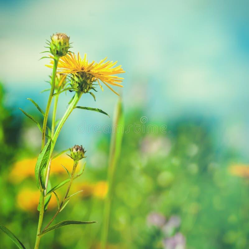 Sommerlandschaft mit wilden Blumen lizenzfreie stockfotos