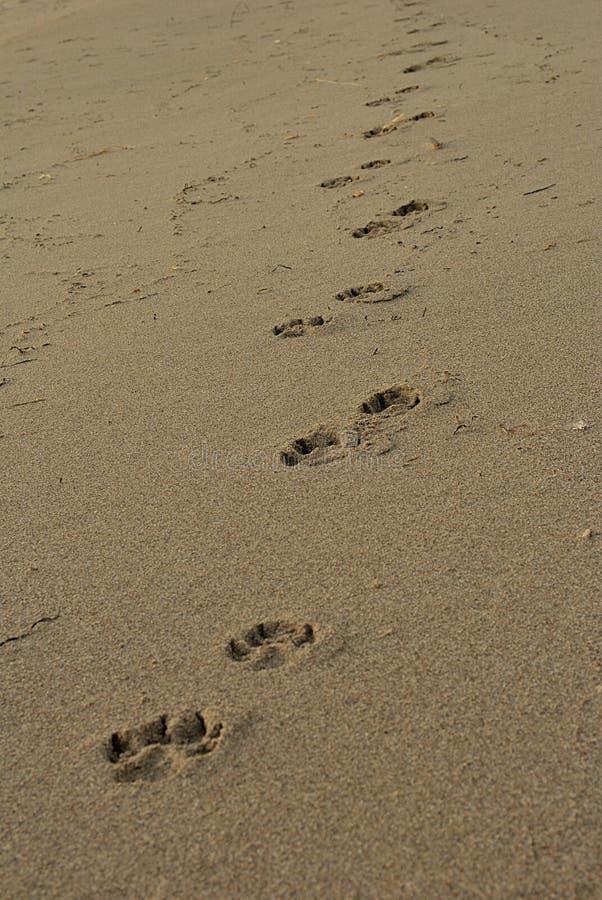 Sommermeer, Hundeabdrücke auf dem Strand früh morgens, VE lizenzfreie stockfotografie