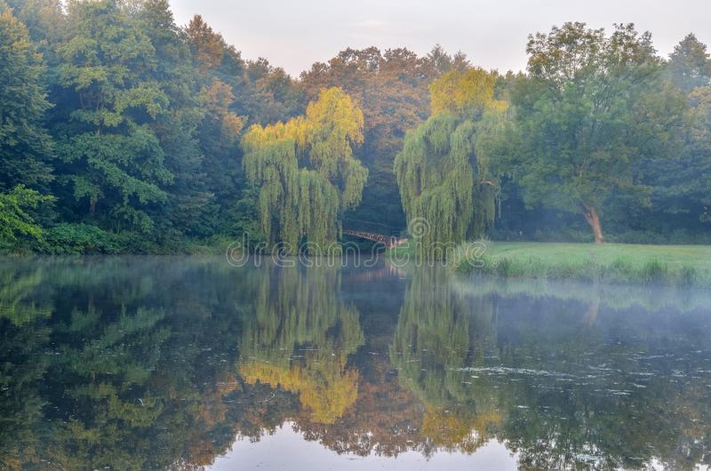 Sommermorgen im Park lizenzfreie stockfotos