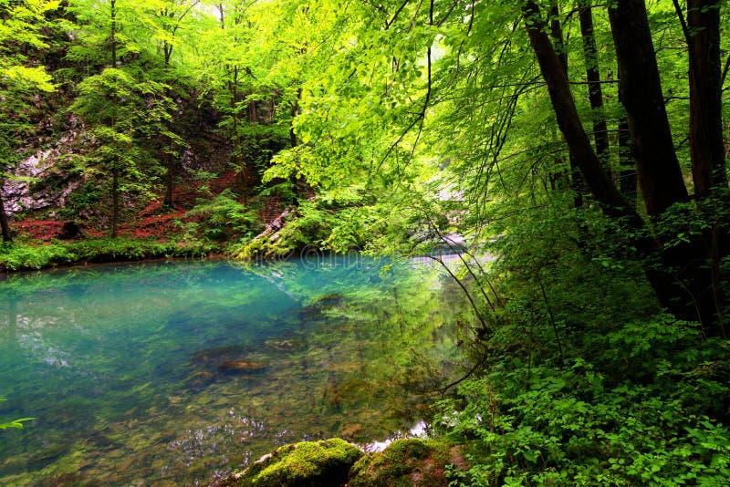 Sommermorgen nahe dem dunklen See in Slowenien stockfoto