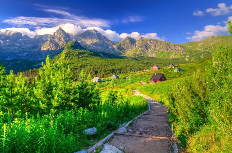 Sommermorgenfarben in den Bergen stockfotos