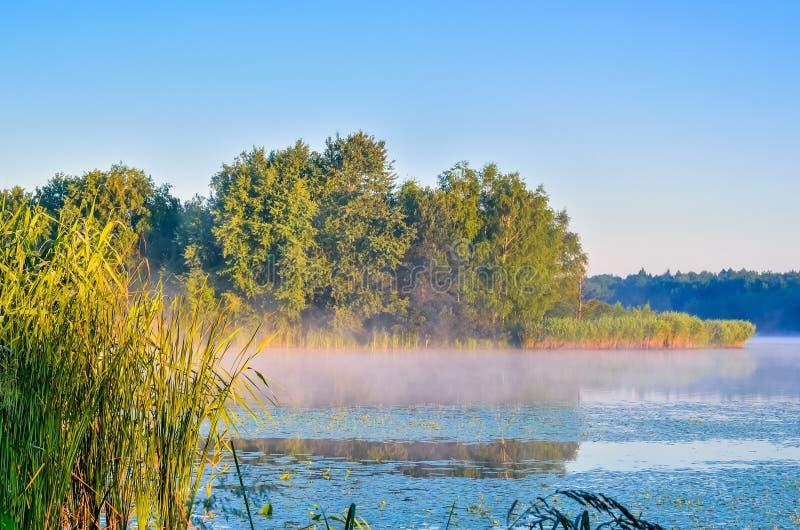 Sommermorgenlandschaft lizenzfreie stockfotografie